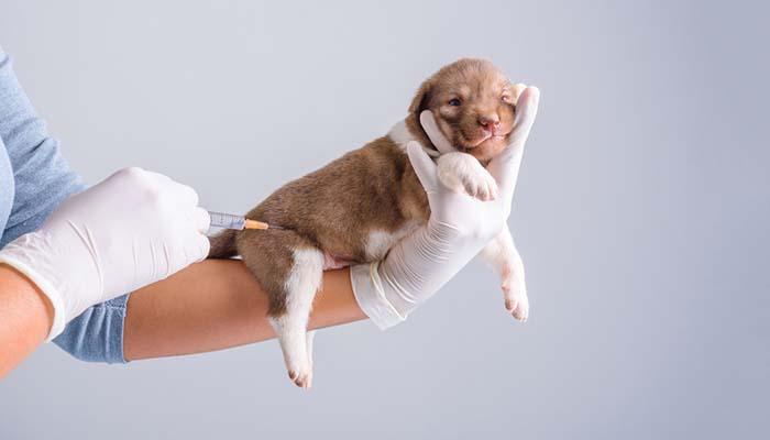 Phương Pháp Phòng Bệnh Tiêu Chảy Ở Chó Con