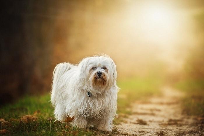 Tại Sao Nên Đặt Tên Cho Chó Cưng