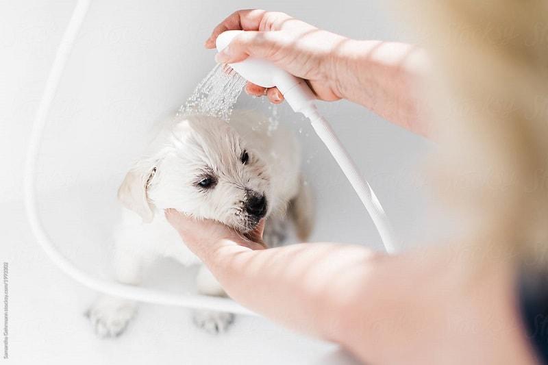 tắm cho chó con