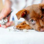 tẩy giun cho chó con