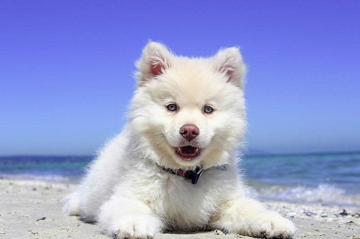 Cách Đặt Tên Cho Chó Con Mà Ai Cũng Nên Biết