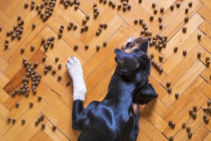 Lợi Ích Khi Sử Dụng Thức Ăn Chuyên Dụng Cho Chó Cưng