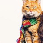 """Chú mèo đường phố mang tên Bob"""""""