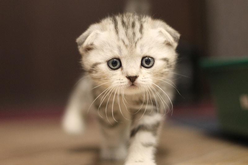 cách nuôi mèo