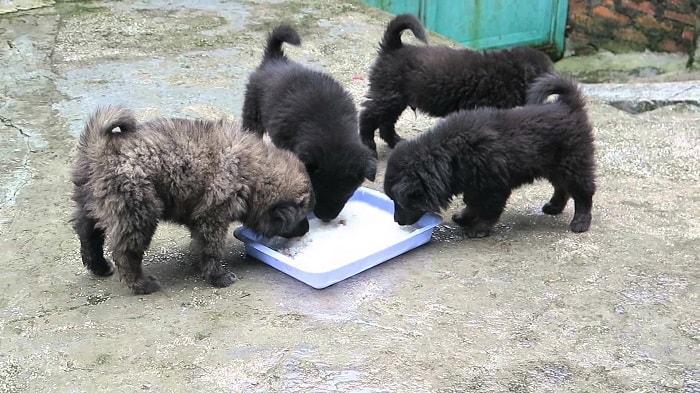 Thức Ăn Cho Chó Bắc Hà