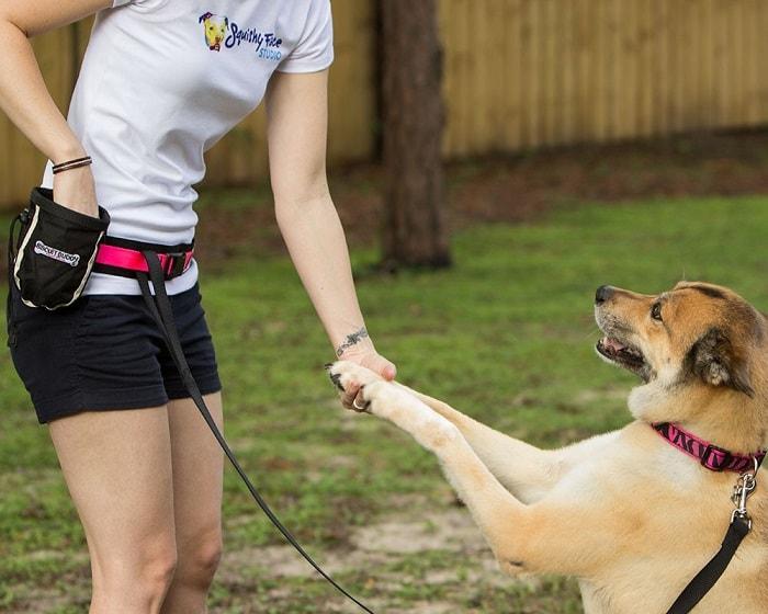 Cách Huấn Luyện Chó Đi Bằng Hai Chân