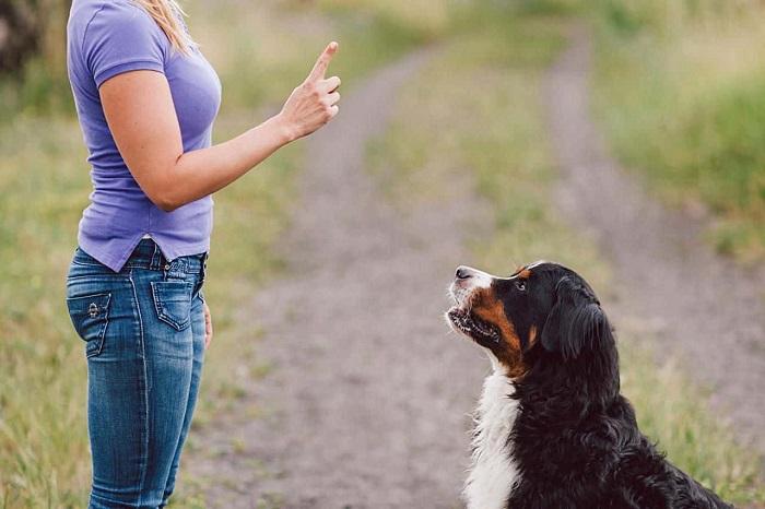 huấn luyện chó đứng lên