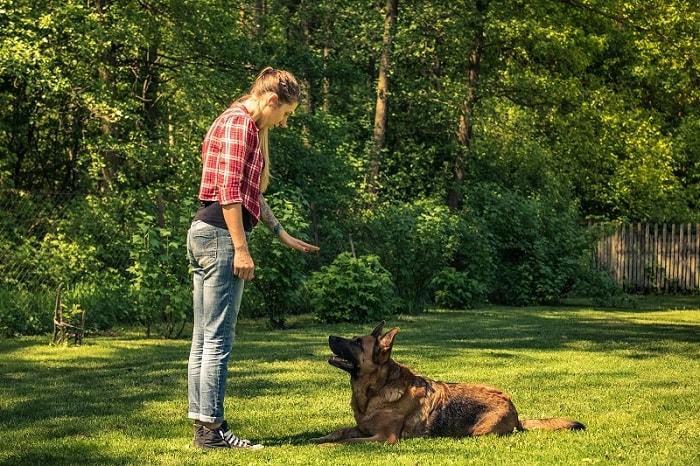 Huấn Luyện Chó Ngồi Xuống