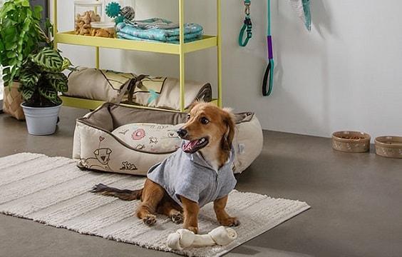 nhà cho chó dễ thương