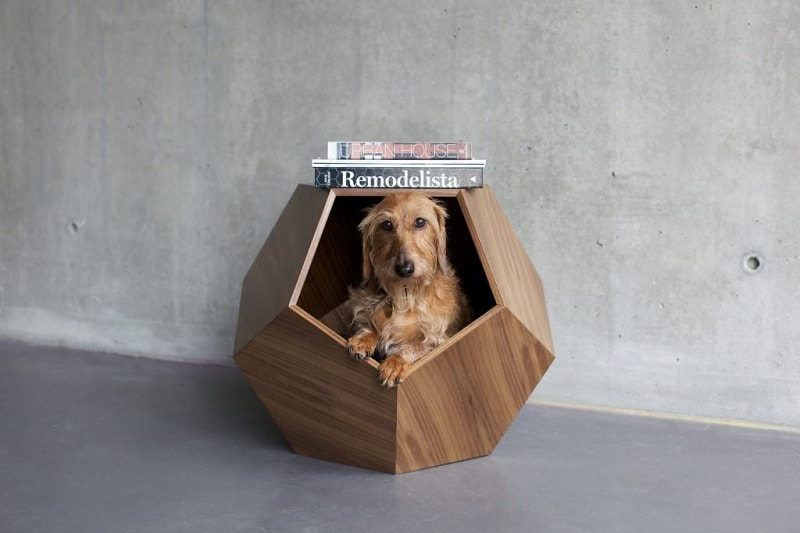 nhà cho chó