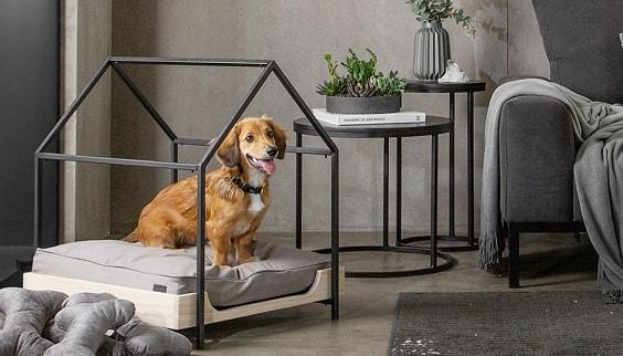 nhà bằng sắt cho chó