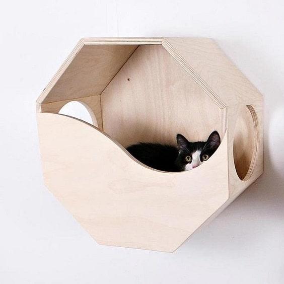 nhà cho mèo con