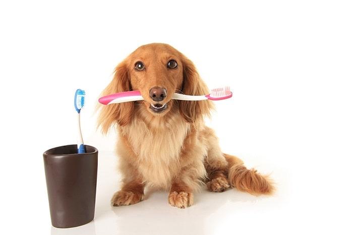 Cách Điều Trị Chó Bị Hôi Miệng