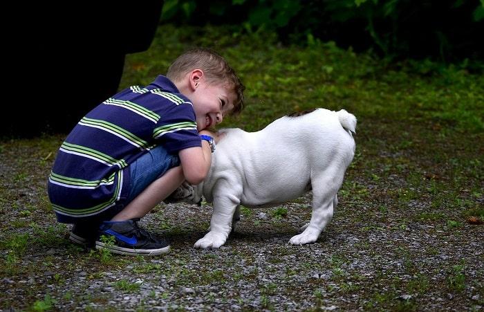 Thường Xuyên Cho Chó Bulldog Tập Thể Dục