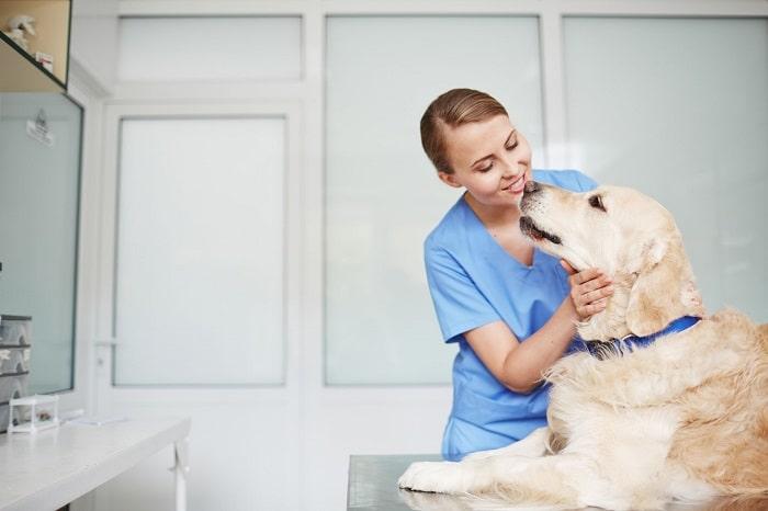 Điều Trị Chó Bị Thở Gấp