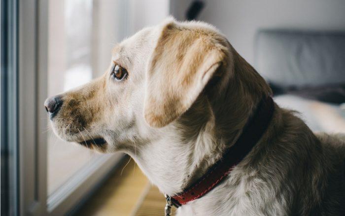 Cách Điều Trị Khi Chó Bị Stress