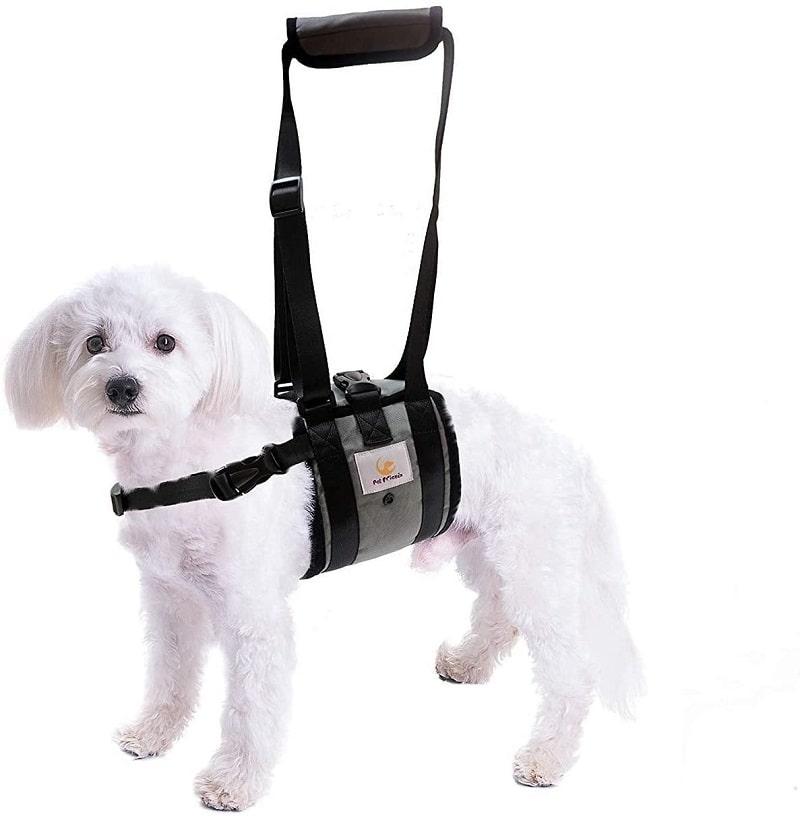 chó bị bại liệt