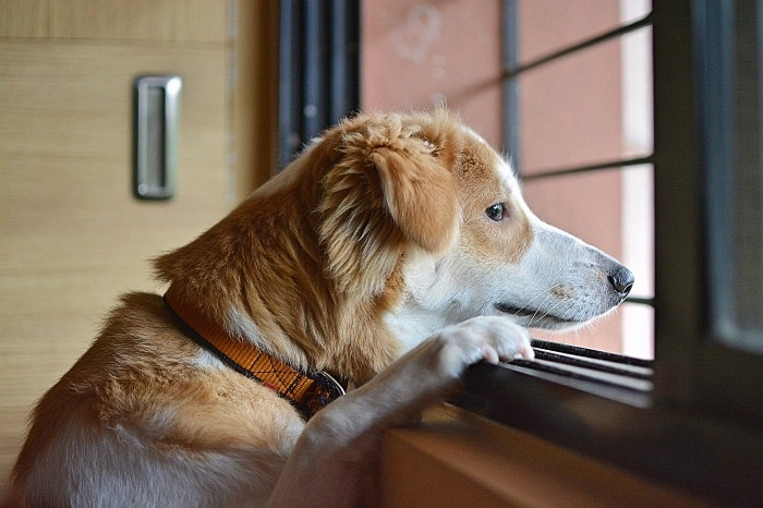 Dấu Hiệu Nhận Biết Chó Bị Stress
