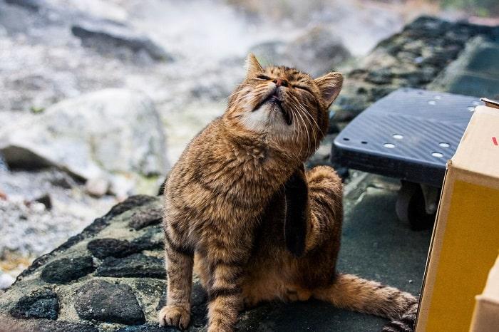 Nhận Biết Dấu Hiệu Mèo Bị Ghẻ