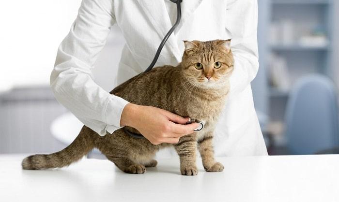 Nguyên Nhân Hình Thành Bệnh Búi Lông Mèo