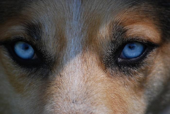 Vậy Chó Có Thực Sự Mù Màu