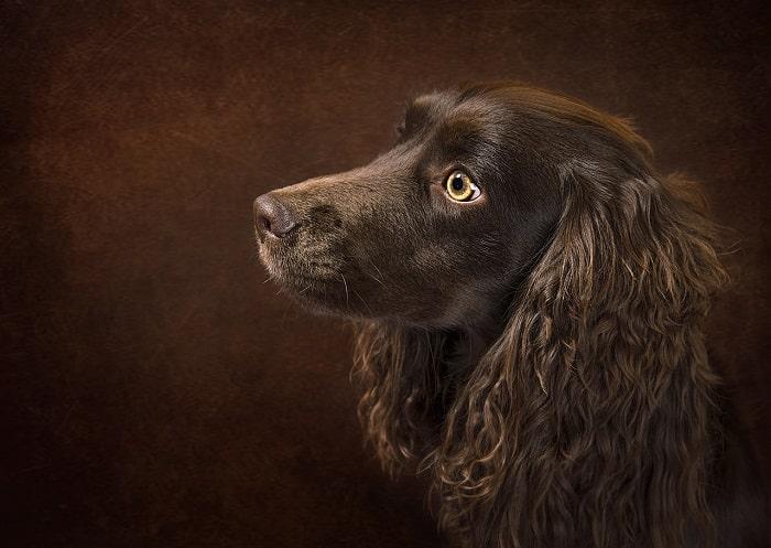 Cách Tính Tuổi Chó Dựa Vào Ngoại Hình