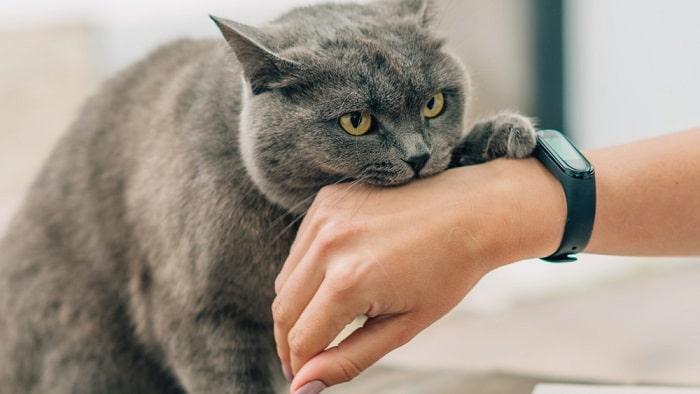 Dấu Hiệu Mèo Bị Co Giật