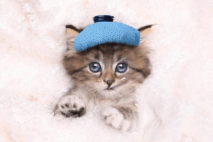 Nguyên Nhân Mèo Bị Ốm