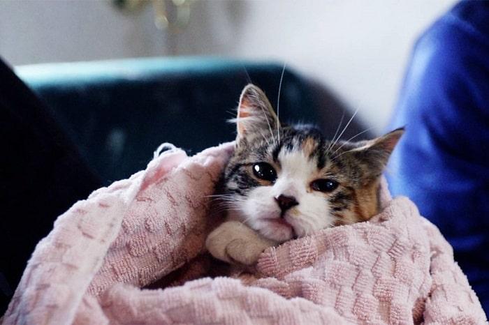 Cách Nhận Biết Mèo Bị Ốm