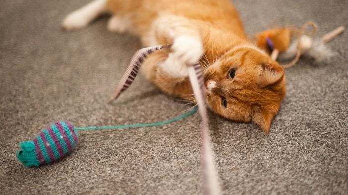 Cách Phòng Tránh Mèo Bị Co Giật