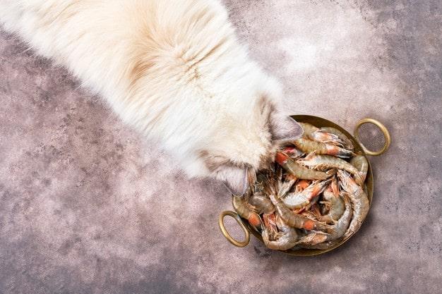 Liệu Mèo Có Ăn Được Tôm Không
