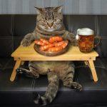mèo có ăn được tôm không