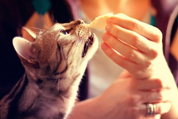 Liệu Mèo Có Ăn Được Phô Mai Không