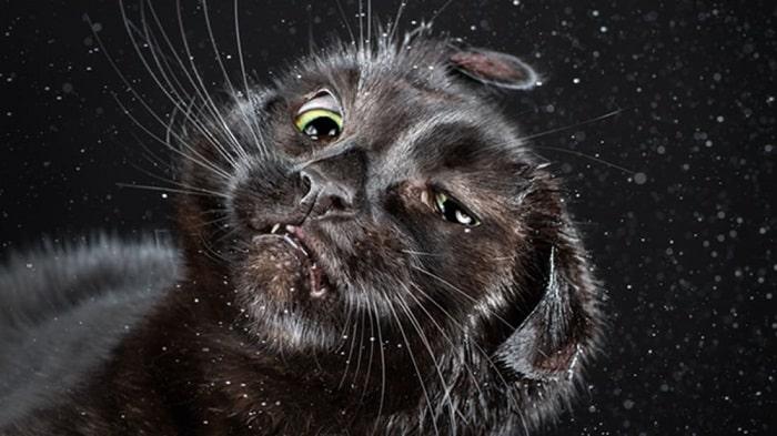 Nguyên Nhân Mèo Bị Run