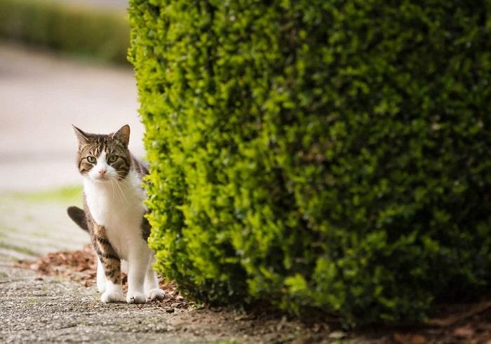 Cách Tìm Kiếm Mèo Bị Lạc