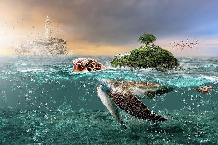 Rùa Biển