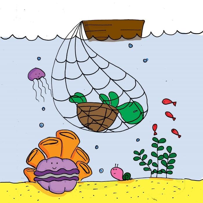 Quần Thể Rùa Biển Đang Suy Giảm