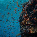 sinh vật biển