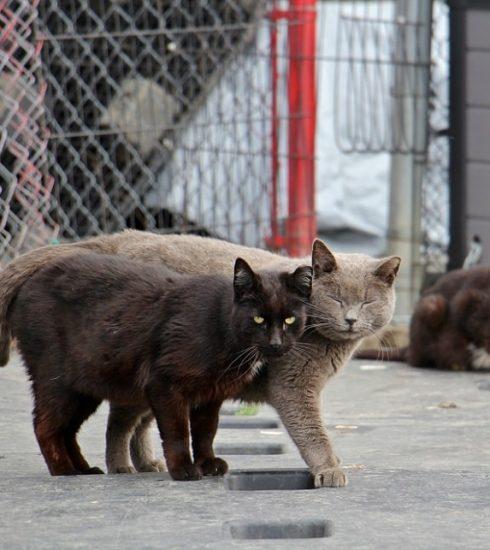 tìm mèo lạc