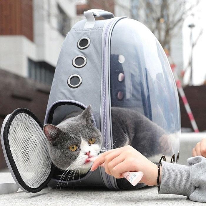 Vận Chuyển Mèo Đi Xa Bằng Xe Khách