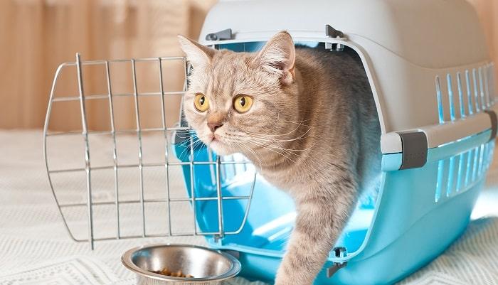 Vận Chuyển Mèo Đi Xa Bằng Xe Máy