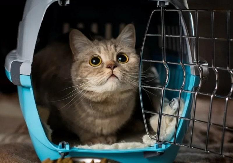 vận chuyển mèo