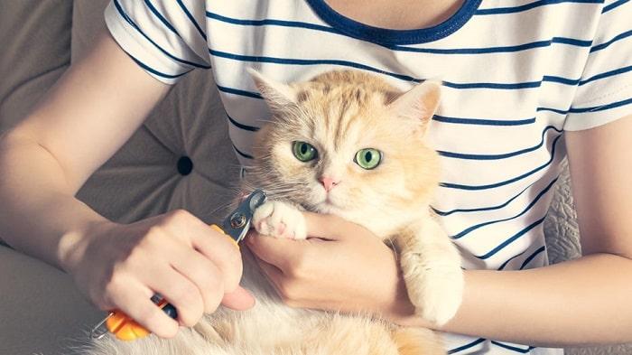 Có Nên Cắt Móng Cho Mèo